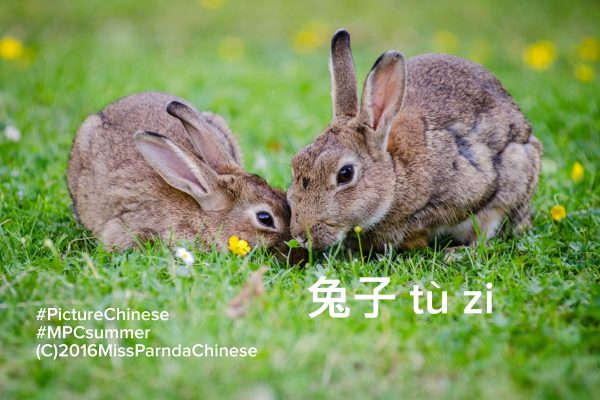 Miss Panda's Mini Lessons:  Picture Chinese Summer Series